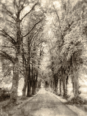 shady: Lane of oak trees in sepia vintage tones with scratches and stains.