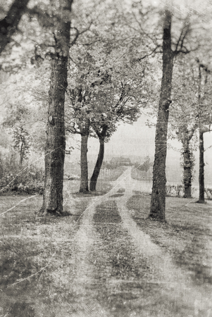 dirt track: Dirt track with several trees on both sides, textured into a foggy tranquil feeling in sepia tones.