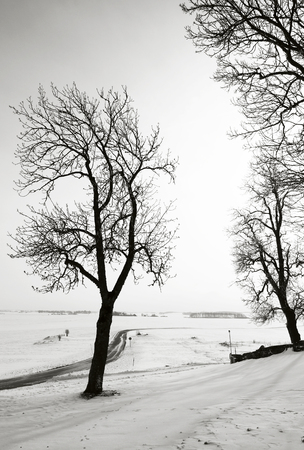 Bare trees against a clear sky in cold wintertime with rural fields in Sweden, in black and white tones.