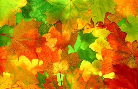 Texture made from beauty colourful leaves photo