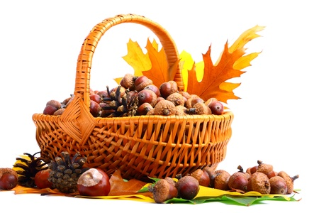 Beautiful basket full of autumn acorns, chestnuts and leaves photo