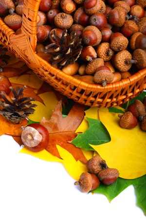 Beautiful wicker basket full of acorns, chestnuts and cones photo