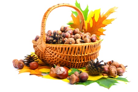 Beautiful basket full of autumn acorns, cones and chestnuts Stock Photo - 10841407
