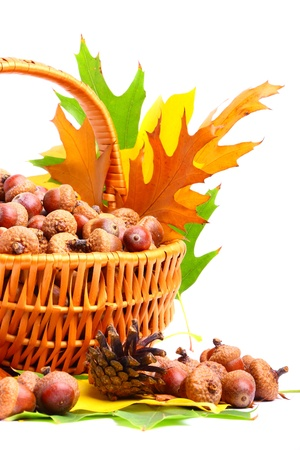 Beautiful basket full of autumn acorns, cones and chestnuts photo