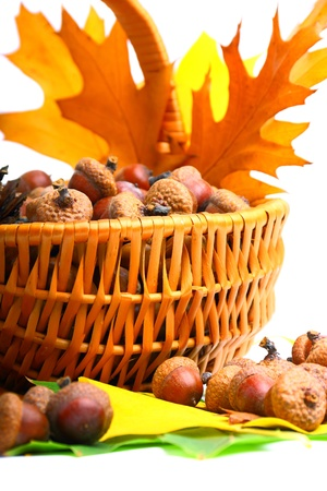 Beautiful basket full of autumn acorns, cones and chestnuts Stock Photo - 10841413
