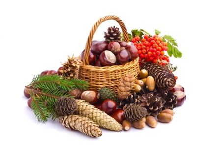 Wicker basket full of autumn acorns, cones and chestnuts Stock Photo - 15542593