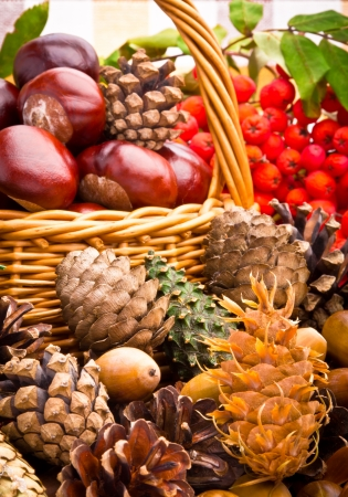Wicker basket full of autumn acorns, cones and chestnuts Stock Photo - 15542595
