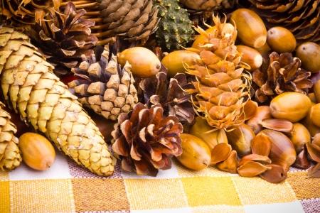 Wicker basket full of autumn acorns, cones and chestnuts photo