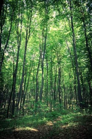 Mysterious dark forest near Rzeszow, Poland photo