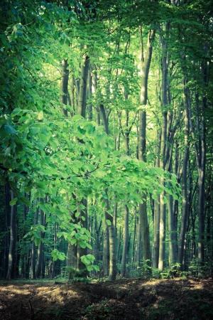 inscrutable: Mysterious dark forest near Rzeszow, Poland Stock Photo
