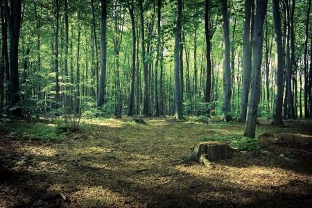 Mysterious dark forest near Rzeszow, Poland 免版税图像