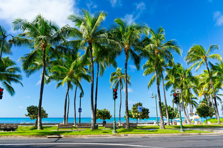 Palms in Honolulu, Hawaii, United States Stock Photo