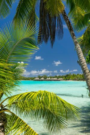 Vue de Paradise atoll de Rangiroa, Polynésie française Banque d'images