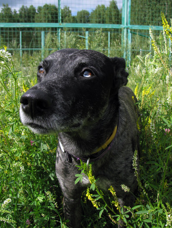 compassionate: Compassionate dog asks forgiveness
