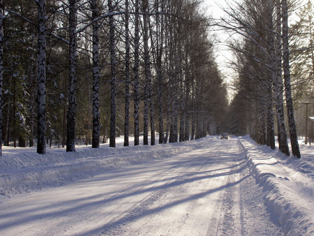 Winter road through the forest photo
