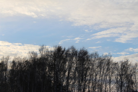 Birch against the beautiful sky in the early morning photo