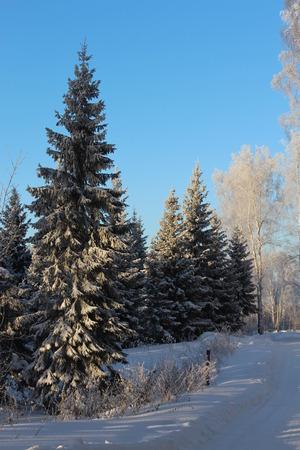 diciembre: Fr�o invierno bosque cubierto de nieve hermosa en diciembre Foto de archivo