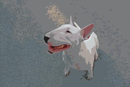kampfhund: Abgebildet Englisch Bull Terrier