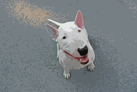 stafford: Pictured English bull Terrier