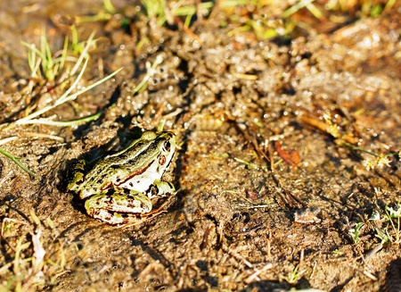 frog in the grass Stock Photo - 9951869
