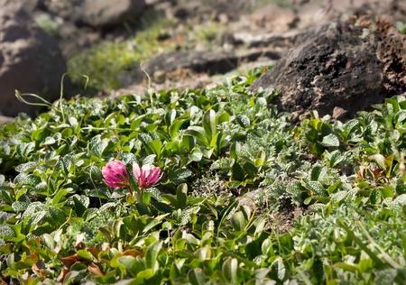 kamchatka: vegetazione della Kamchatka