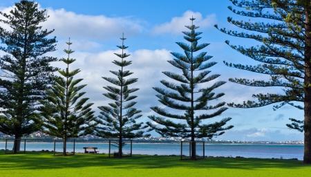 riverside landscape: Riverside landscape in southern Australia