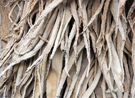 agave: hojas secas de agave