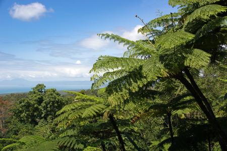 port douglas: Daintree National Park, Queensland, Australia