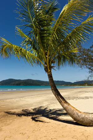 palmtree: beach with palmtree in Queensland