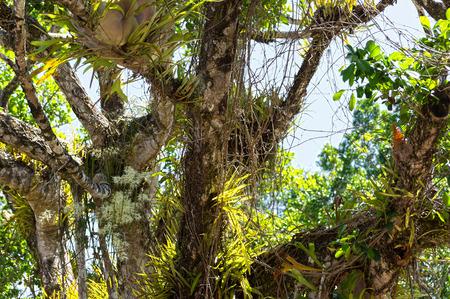 queensland: Daintree National Park, Queensland, Australia