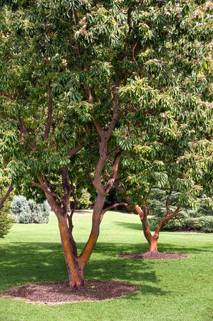adelaide: Park in Adelaide Stock Photo