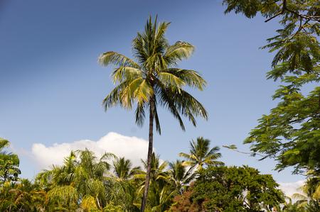 queensland: Palms in Queensland