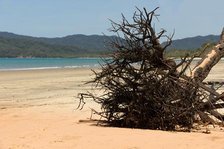 port douglas: beach in Queensland, australia