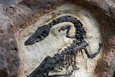 discovered:  Fossil