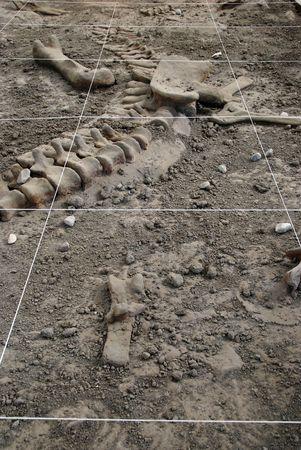archeology Dig photo