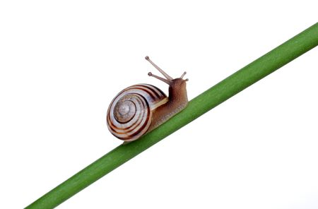 Snail on a branch Stock Photo - 5698002