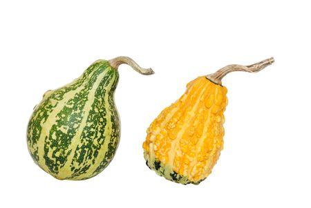 fall gourds photo