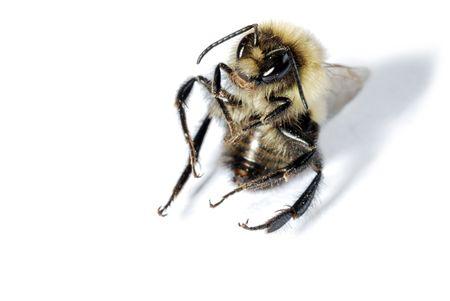 Sitting Bee Stock Photo - 5720664