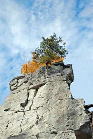 huge: Tree growing on a cliff face