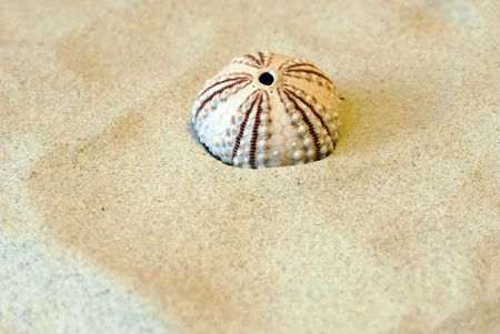 gritty: Round shell in sand