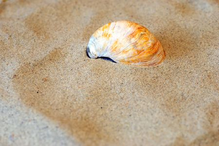 gritty: Curved shell in the sand Stock Photo