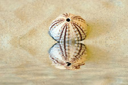 gritty:  Round shell in the sand with near the water