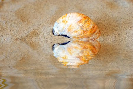 gritty: Curved shell in the sand with near the water Stock Photo