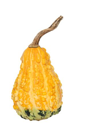 two tone: two tone gourd
