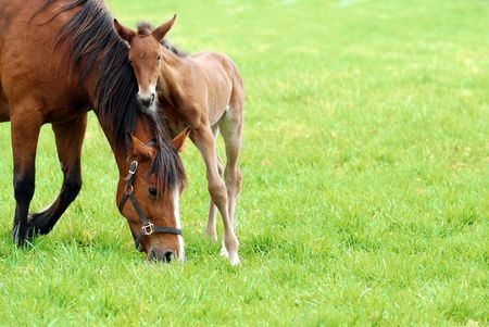 quarter horse: mare and her foal