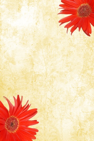 빨간색 gerbera 데이지와 수채화 용지