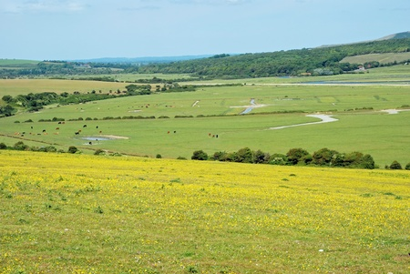 english countryside with wildflowers Stock Photo - 10161796