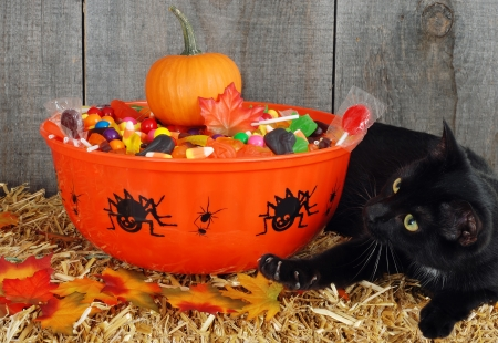 fruit worm: black cat protecting halloween candy Stock Photo