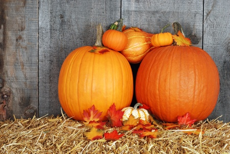 pumpkins with fall leaves photo
