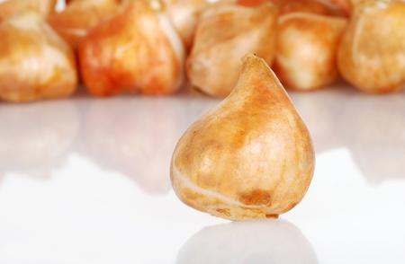 bulb tulip: closeup tulip bulb